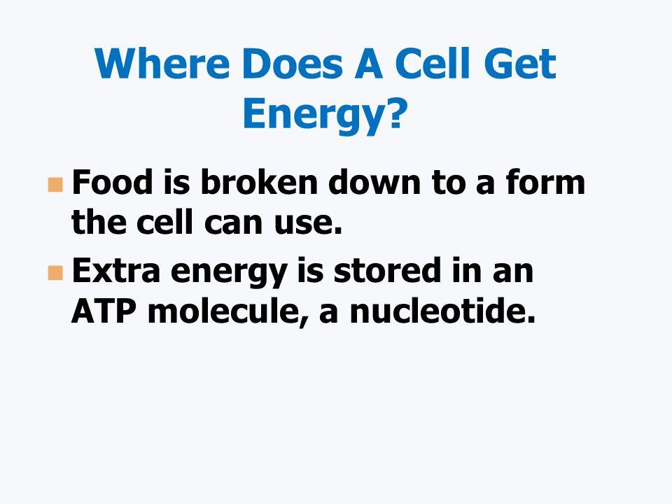 Cellular Respiration C 6 H 12 O 6 + O 2 CO 2 + H 2 O + 36-38 ATP 666