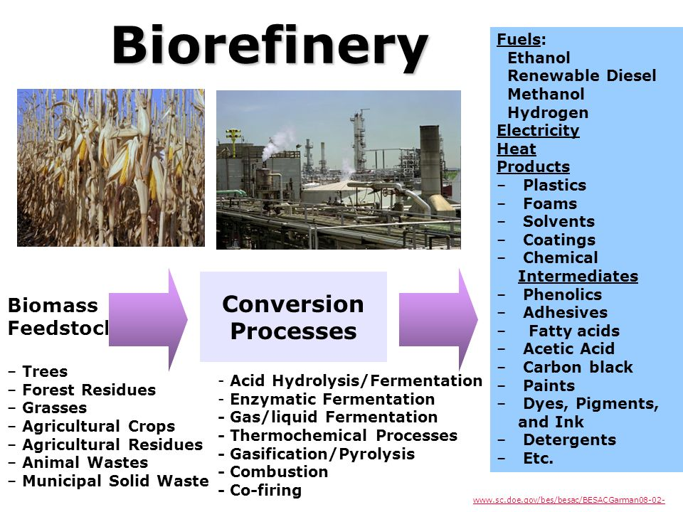 Conversion Processes Biomass Feedstock – – Trees – – Forest Residues – – Grasses – – Agricultural Crops – – Agricultural Residues – – Animal Wastes –