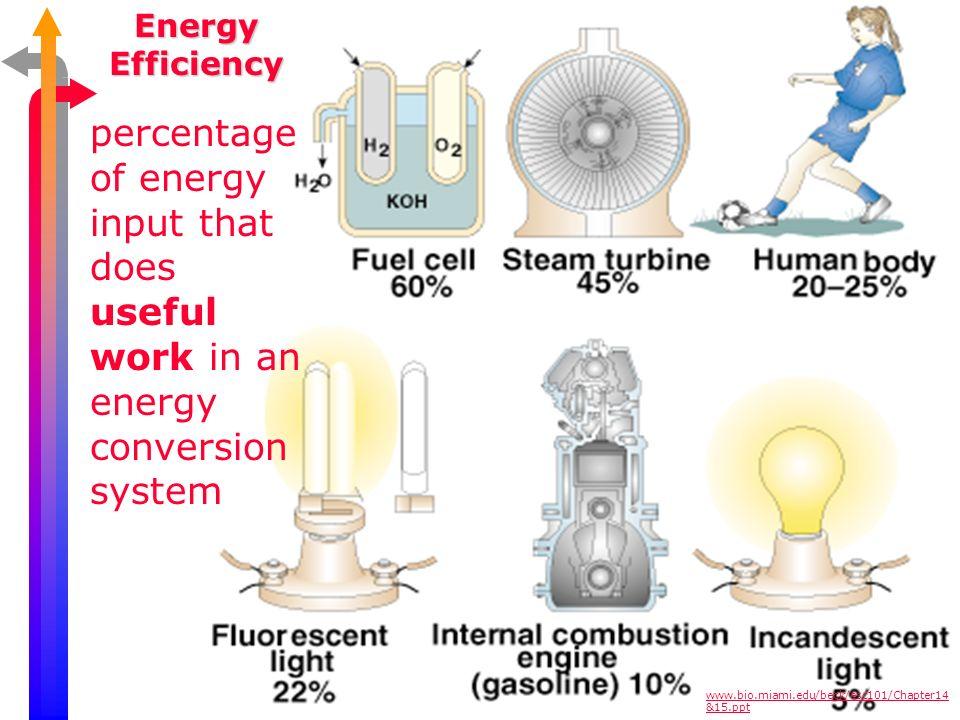 Types of Biomass Fuel www.bio.miami.edu/beck/esc101/Chapter14 &15.ppt