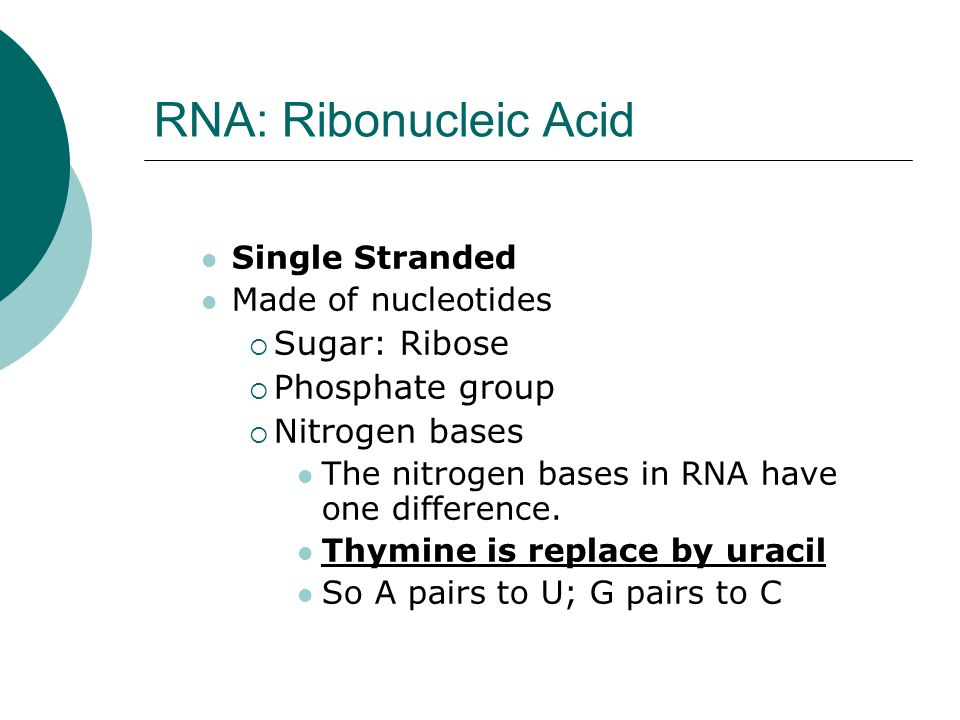 RNA: Ribonucleic Acid Single Stranded Made of nucleotides Sugar: Ribose Phosphate group Nitrogen bases The nitrogen bases in RNA have one difference.