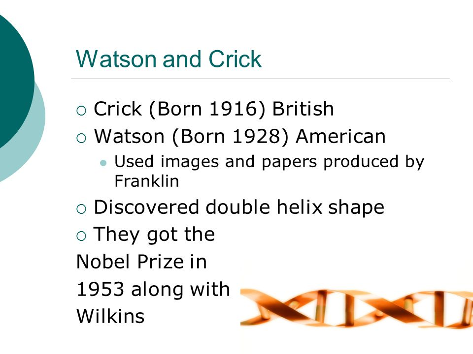 Watson and Crick Crick (Born 1916) British Watson (Born 1928) American Used images and papers produced by Franklin Discovered double helix shape They got the Nobel Prize in 1953 along with Wilkins
