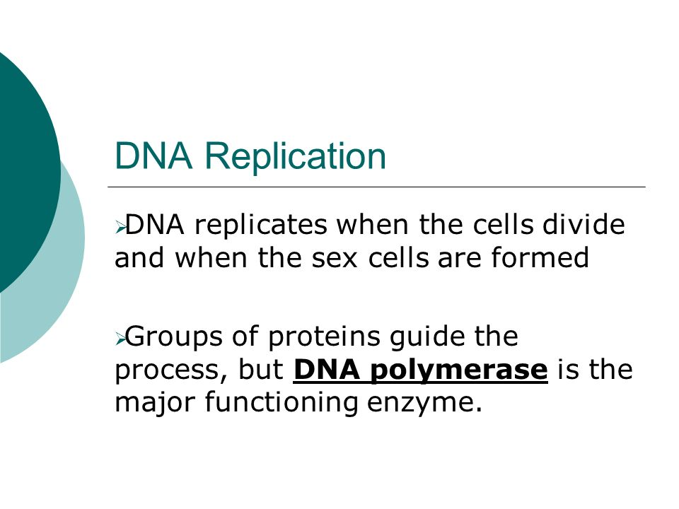 DNA Replication DNA replicates when the cells divide and when the sex cells are formed Groups of proteins guide the process, but DNA polymerase is the major functioning enzyme.