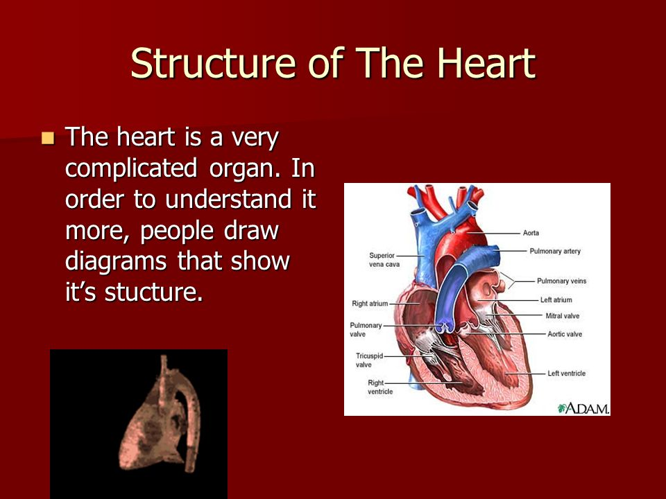 Structure of The Heart The heart is a very complicated organ. In order to understand it more, people draw diagrams that show its stucture. The heart i