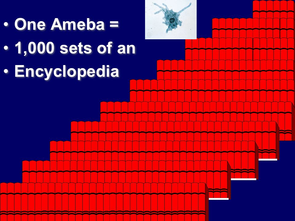 One Ameba = 1,000 sets of an Encyclopedia One Ameba = 1,000 sets of an Encyclopedia