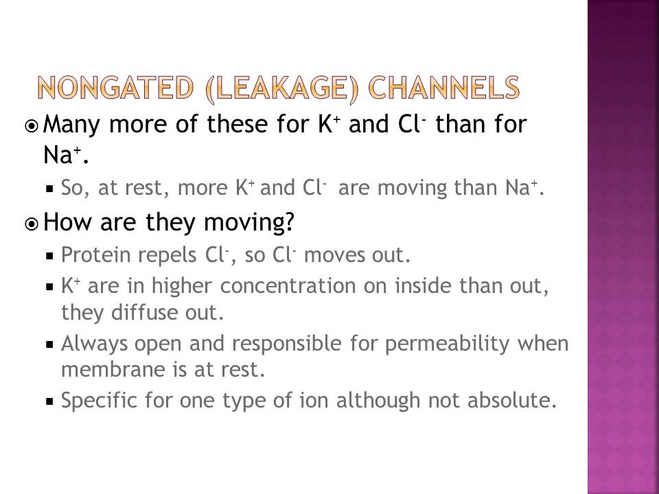 Many more of these for K + and Cl - than for Na +. So, at rest, more K + and Cl - are moving than Na +. How are they moving? Protein repels Cl -, so C