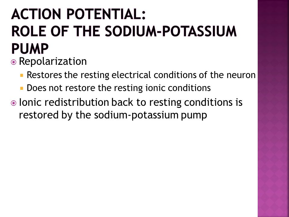 Repolarization Restores the resting electrical conditions of the neuron Does not restore the resting ionic conditions Ionic redistribution back to res