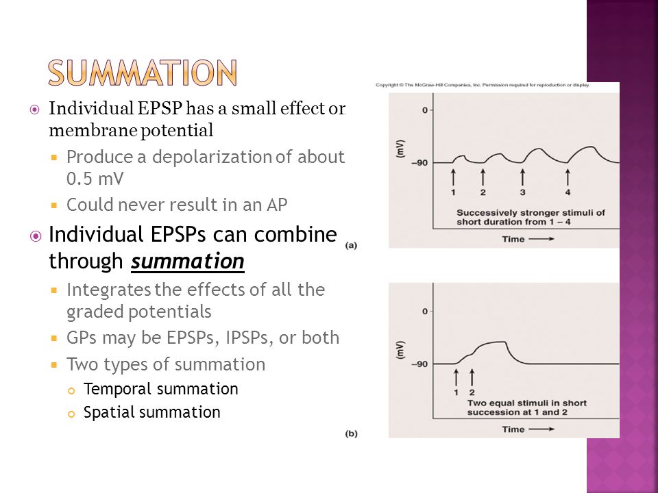 Individual EPSP has a small effect on membrane potential Produce a depolarization of about 0.5 mV Could never result in an AP Individual EPSPs can com