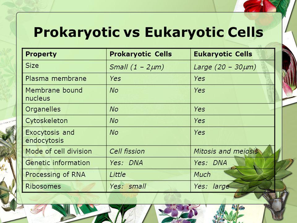 PropertyProkaryotic CellsEukaryotic Cells Size Small (1 – 2 m)Large (20 – 30 m) Plasma membraneYes Membrane bound nucleus NoYes OrganellesNoYes Cytosk