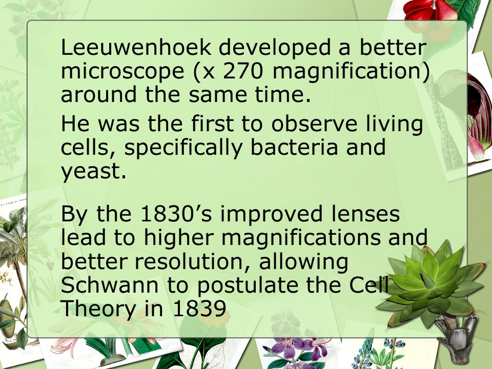 Leeuwenhoek developed a better microscope (x 270 magnification) around the same time. He was the first to observe living cells, specifically bacteria