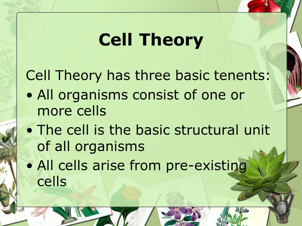 Cell Theory Cell Theory has three basic tenents: All organisms consist of one or more cells The cell is the basic structural unit of all organisms All
