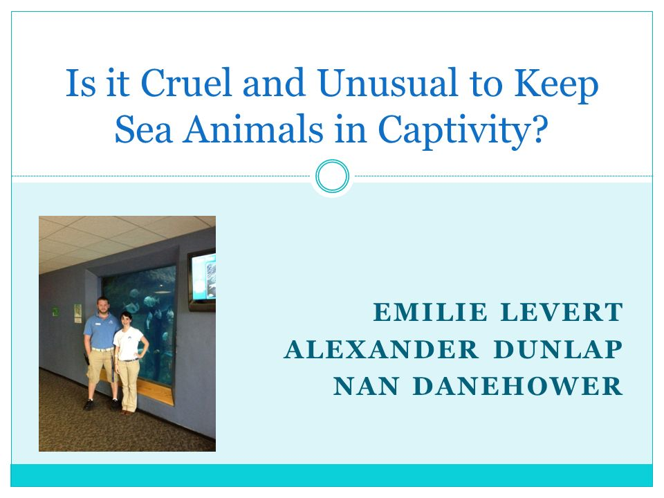 Sea Animals in Captivity I decided to do my junior paper on sea animals in captivity because I have always gone to aquariums and zoos as a child and now that I grow up Im starting to realize the effects it has on the animals.