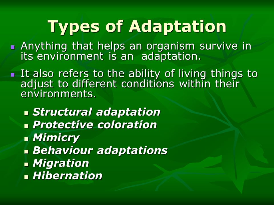 Structural adaptations A structural adaptation involves some part of an animal s body.