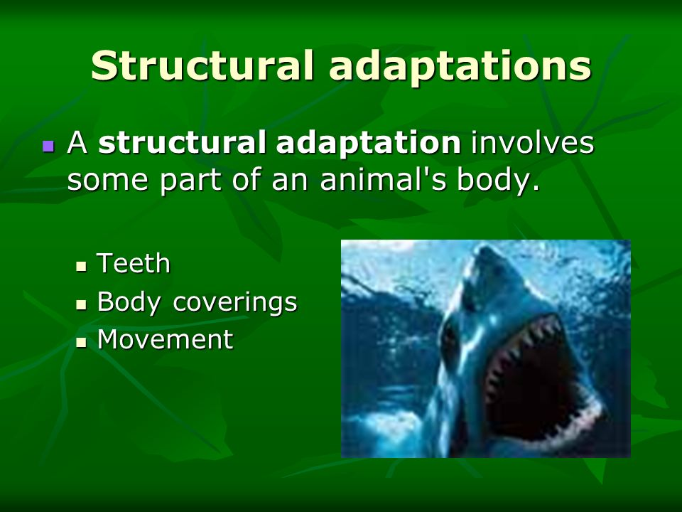Structural adaptations A structural adaptation involves some part of an animal's body. A structural adaptation involves some part of an animal's body.