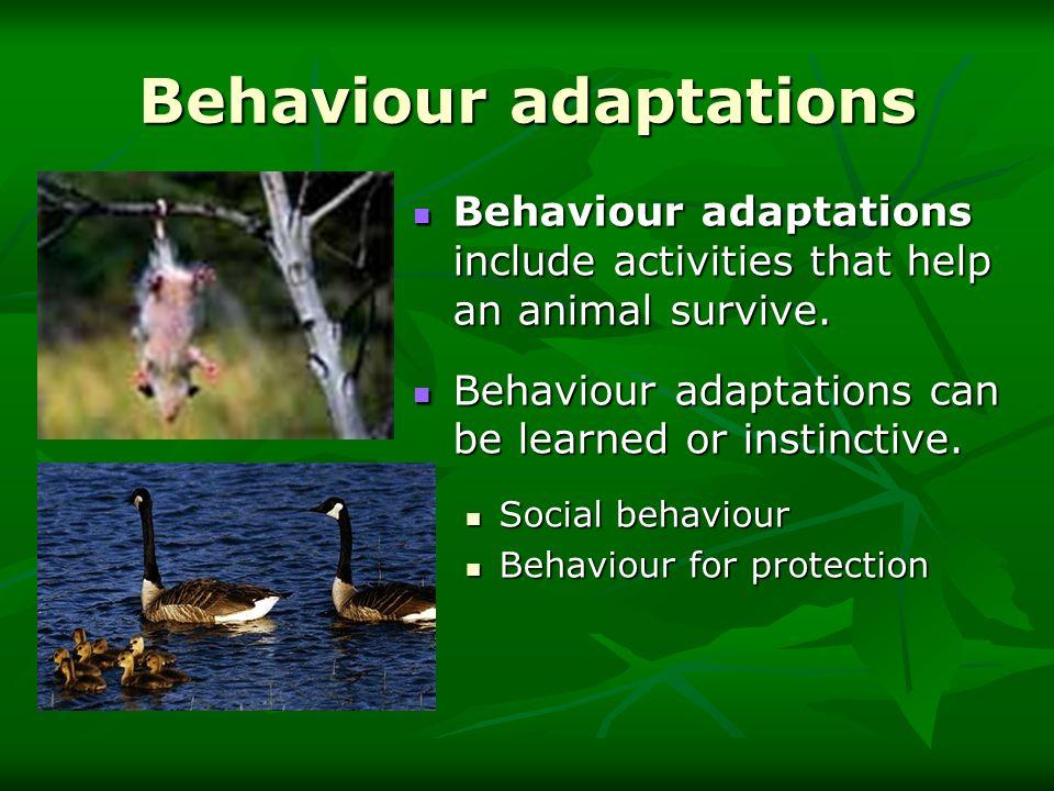 Behaviour adaptations Behaviour adaptations include activities that help an animal survive. Behaviour adaptations include activities that help an anim