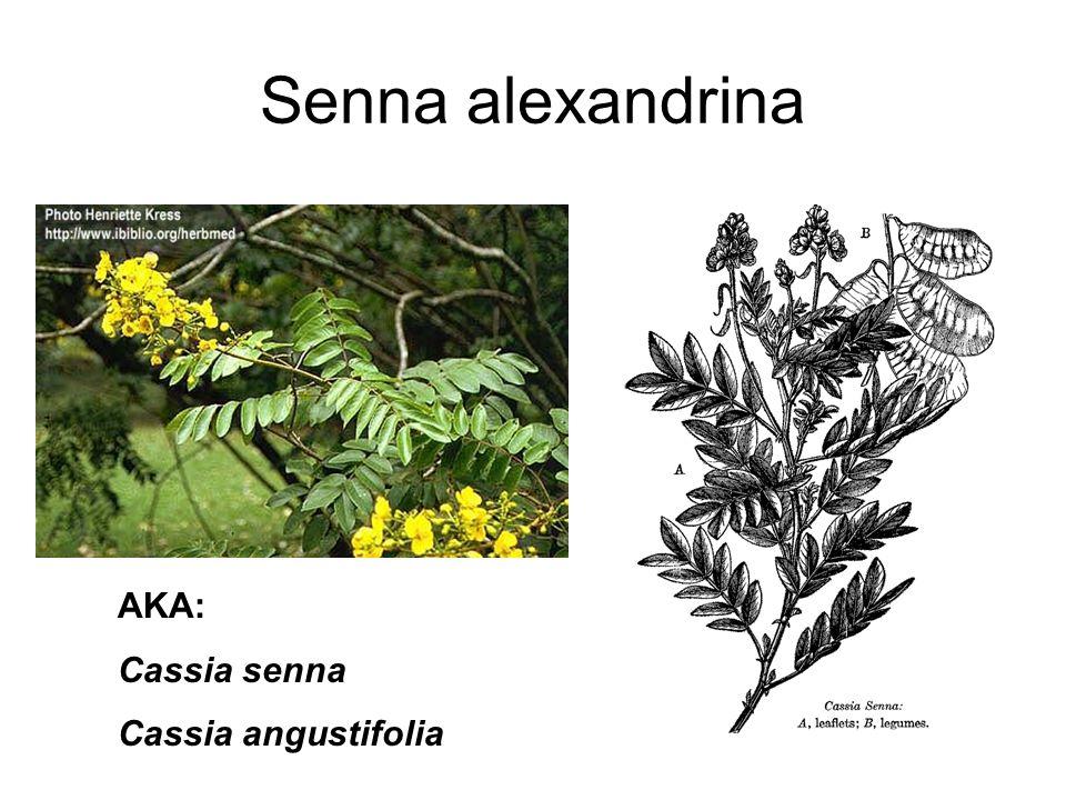 Senna alexandrina AKA: Cassia senna Cassia angustifolia