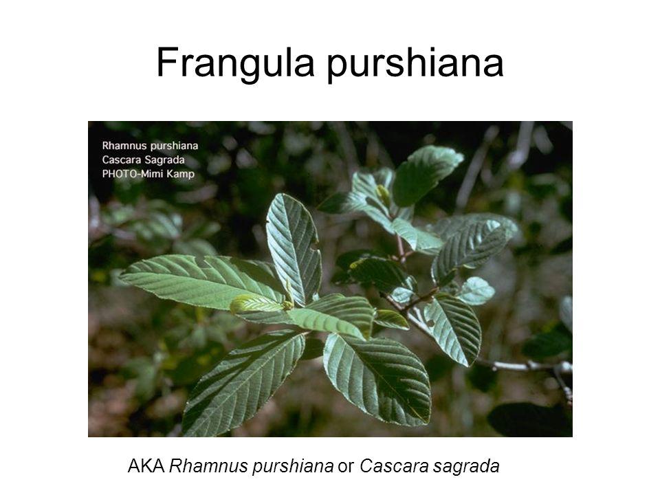 Frangula purshiana AKA Rhamnus purshiana or Cascara sagrada