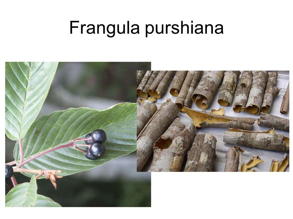 Frangula purshiana