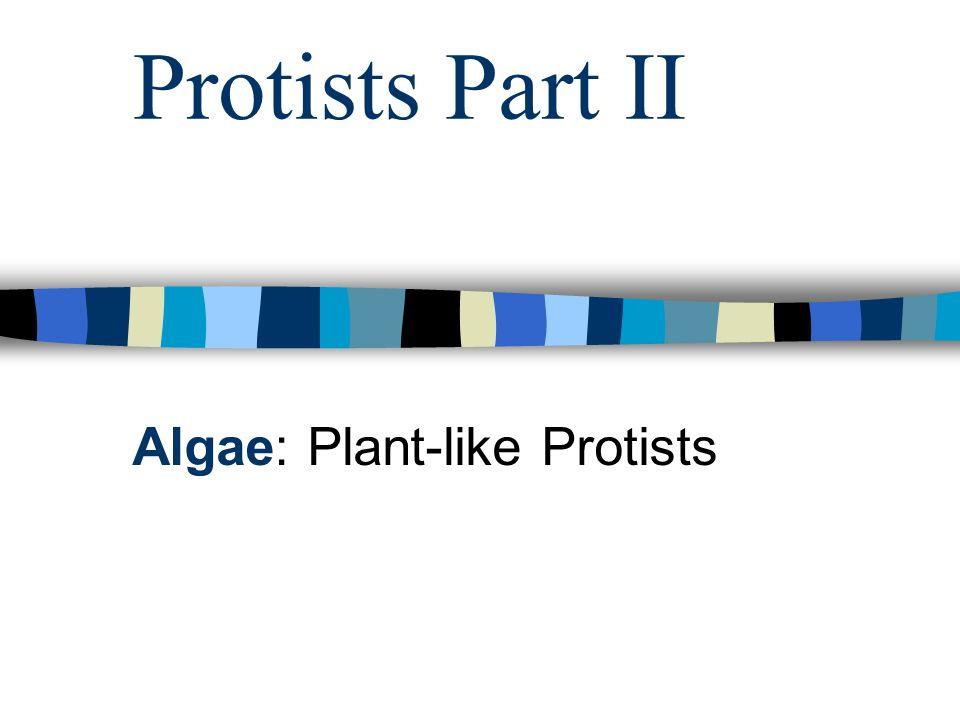 Protists Part II Algae: Plant-like Protists