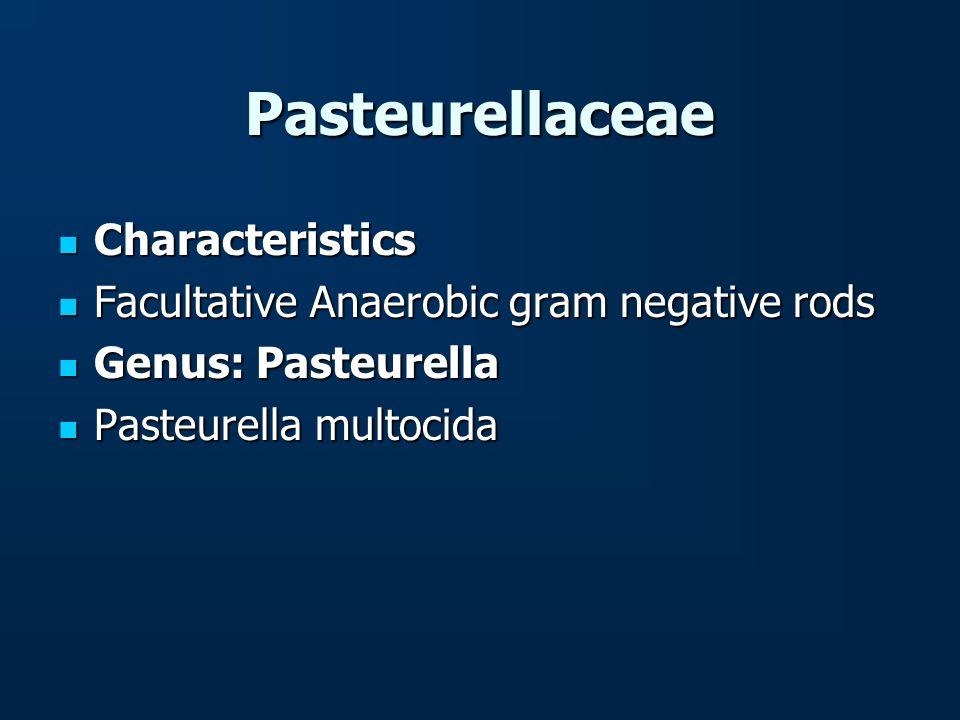 Pasteurellaceae Characteristics Characteristics Facultative Anaerobic gram negative rods Facultative Anaerobic gram negative rods Genus: Pasteurella G