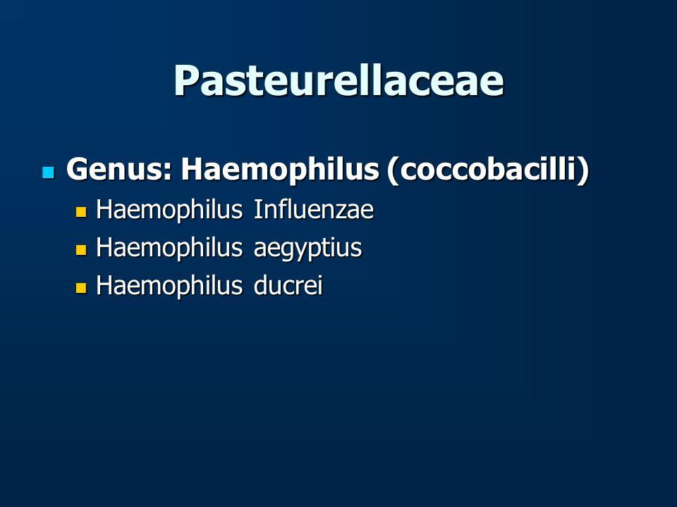 Pasteurellaceae Genus: Haemophilus (coccobacilli) Genus: Haemophilus (coccobacilli) Haemophilus Influenzae Haemophilus Influenzae Haemophilus aegyptiu