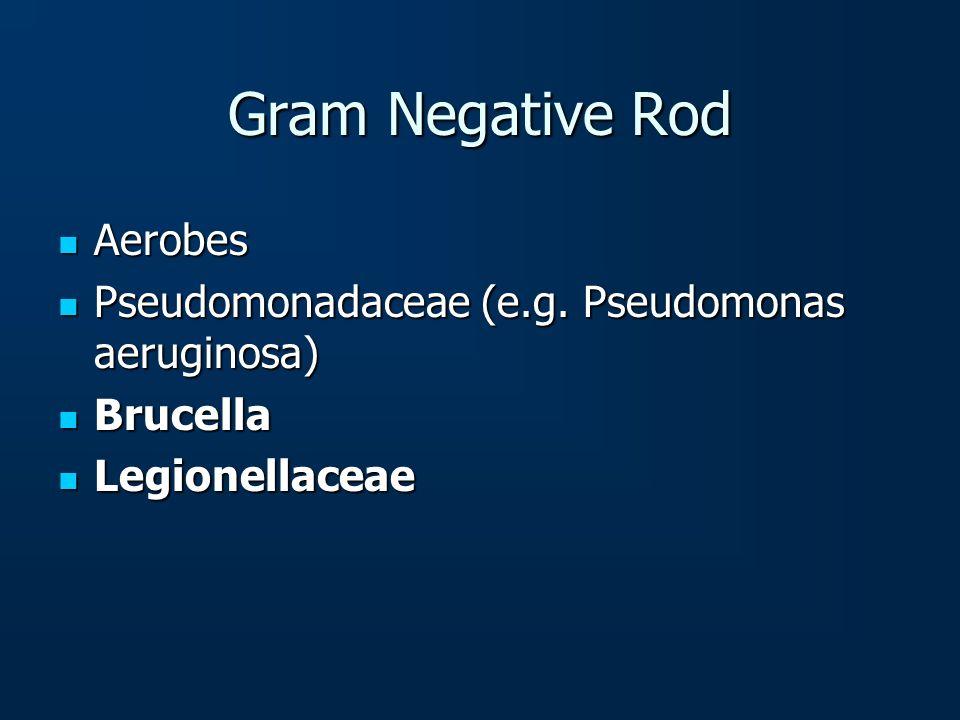 Gram Negative Rod Aerobes Aerobes Pseudomonadaceae (e.g. Pseudomonas aeruginosa) Pseudomonadaceae (e.g. Pseudomonas aeruginosa) Brucella Brucella Legi