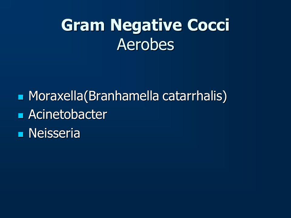 Gram Negative Cocci Aerobes Moraxella(Branhamella catarrhalis) Moraxella(Branhamella catarrhalis) Acinetobacter Acinetobacter Neisseria Neisseria