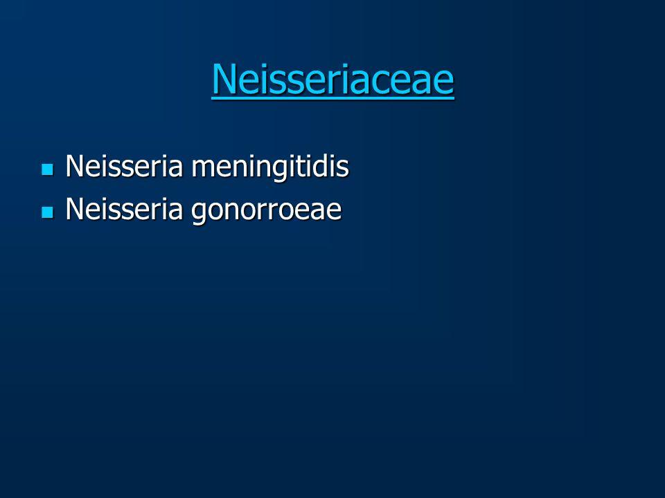 Neisseriaceae Neisseria meningitidis Neisseria meningitidis Neisseria gonorroeae Neisseria gonorroeae
