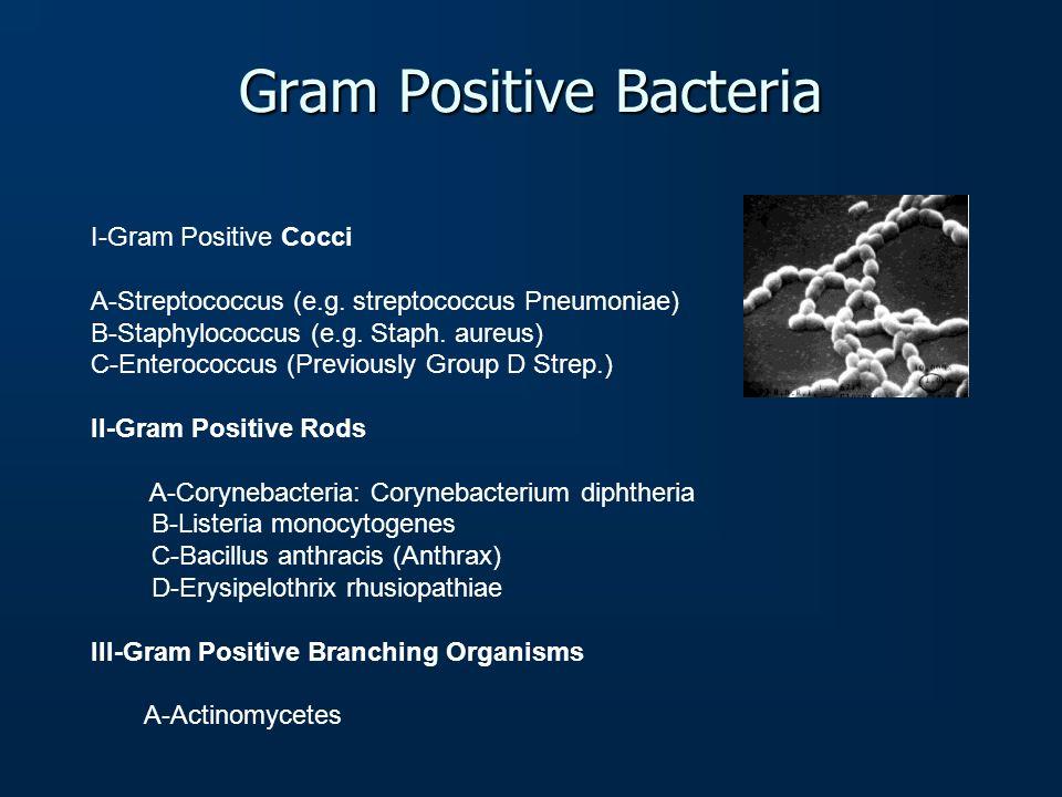 Gram Positive Bacteria I-Gram Positive Cocci A-Streptococcus (e.g. streptococcus Pneumoniae) B-Staphylococcus (e.g. Staph. aureus) C-Enterococcus (Pre