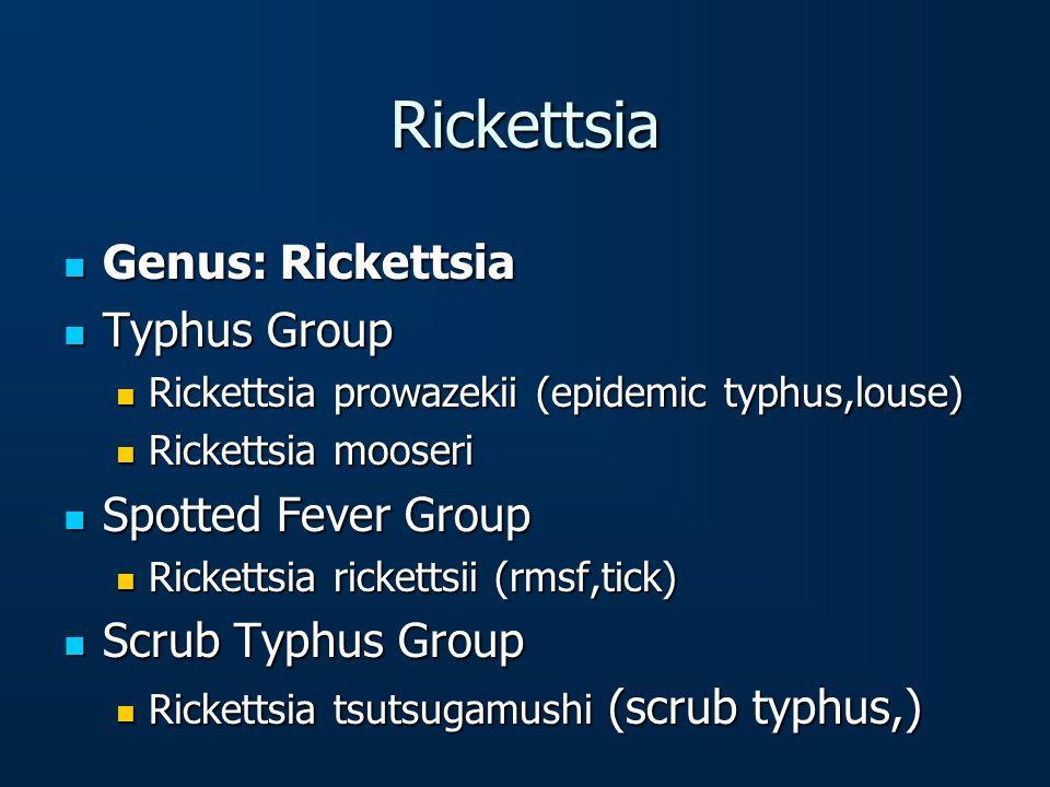 Rickettsia Genus: Rickettsia Genus: Rickettsia Typhus Group Typhus Group Rickettsia prowazekii (epidemic typhus,louse) Rickettsia prowazekii (epidemic