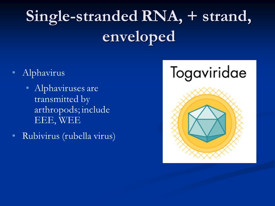 Single-stranded RNA, + strand, enveloped Alphavirus Alphaviruses are transmitted by arthropods; include EEE, WEE Rubivirus (rubella virus)