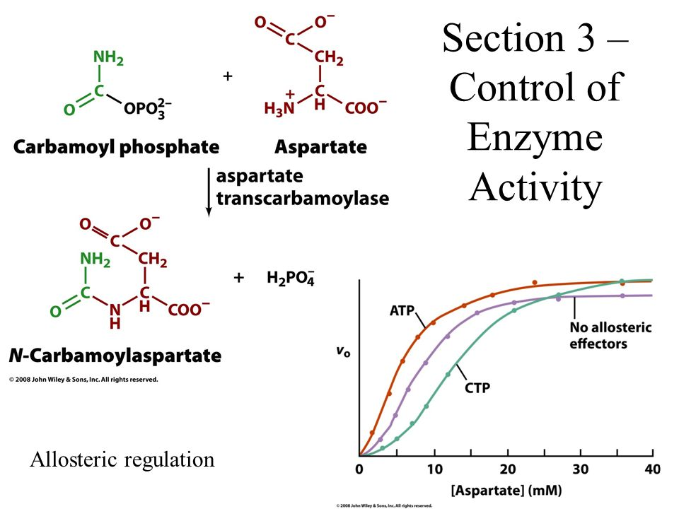 Section 3 – Control of Enzyme Activity Allosteric regulation