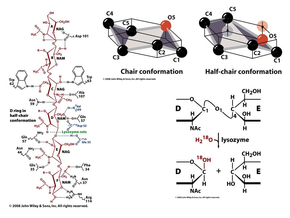 Identifying the active site residues Serine was identified by chemical labeling