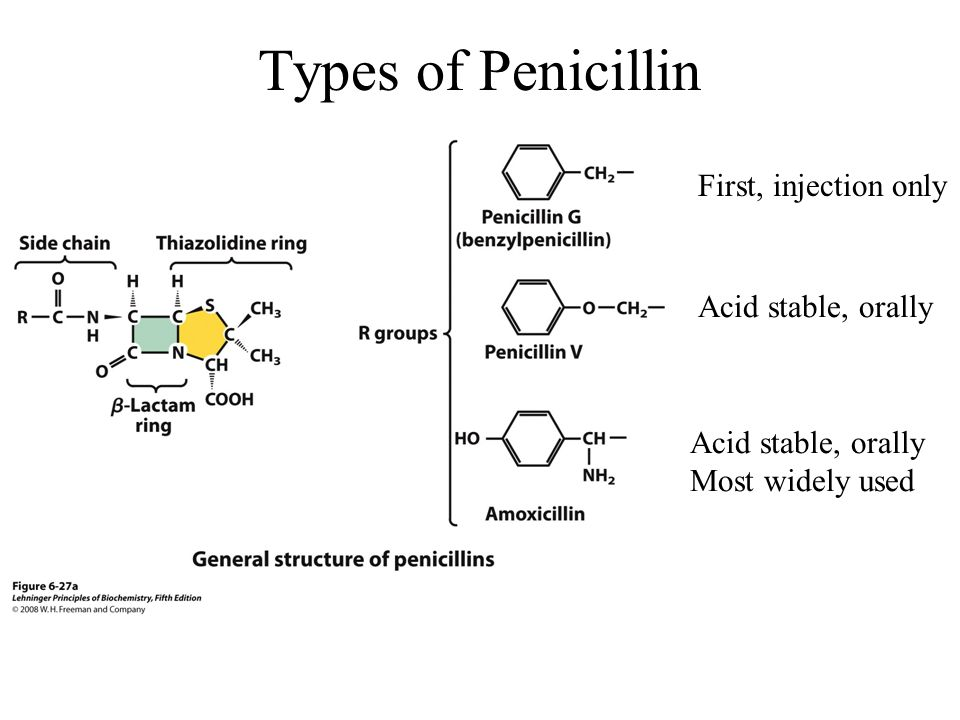 Types of Penicillin First, injection only Acid stable, orally Most widely used