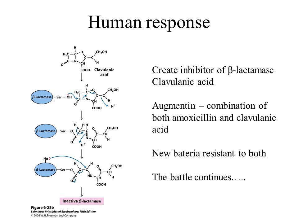 Human response Create inhibitor of β-lactamase Clavulanic acid Augmentin – combination of both amoxicillin and clavulanic acid New bateria resistant t