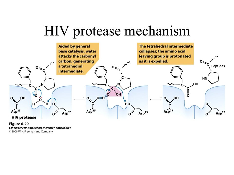 HIV protease mechanism