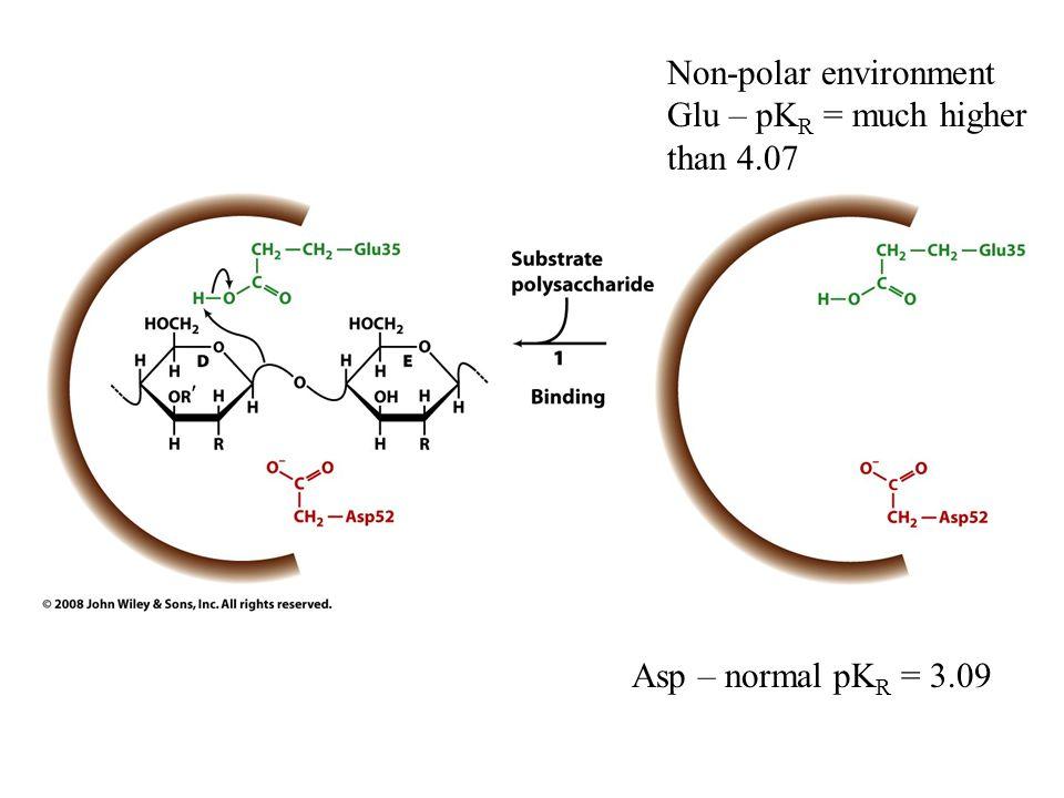 Asp – normal pK R = 3.09 Non-polar environment Glu – pK R = much higher than 4.07
