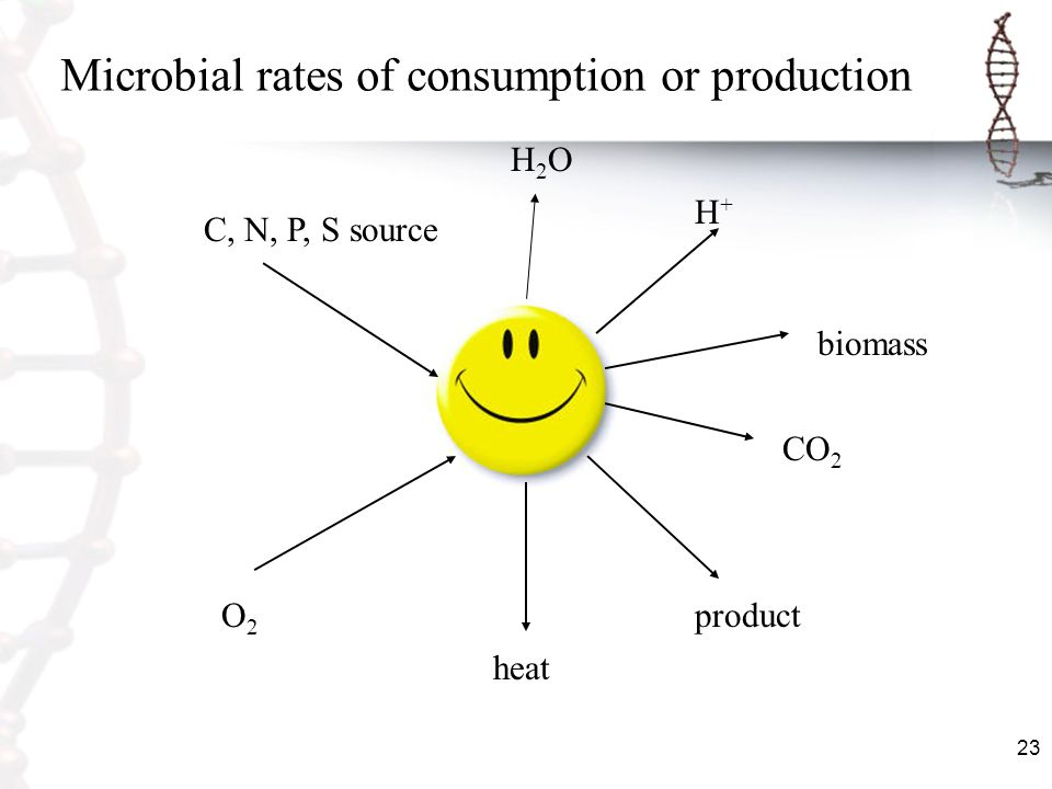23 Microbial rates of consumption or production C, N, P, S source H 2 O H+H+ O2O2 heat product CO 2 biomass