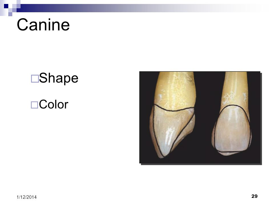 29 Canine Shape Color 1/12/2014