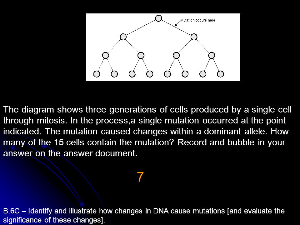 The diagram shows three generations of cells produced by a single cell through mitosis. In the process,a single mutation occurred at the point indicat