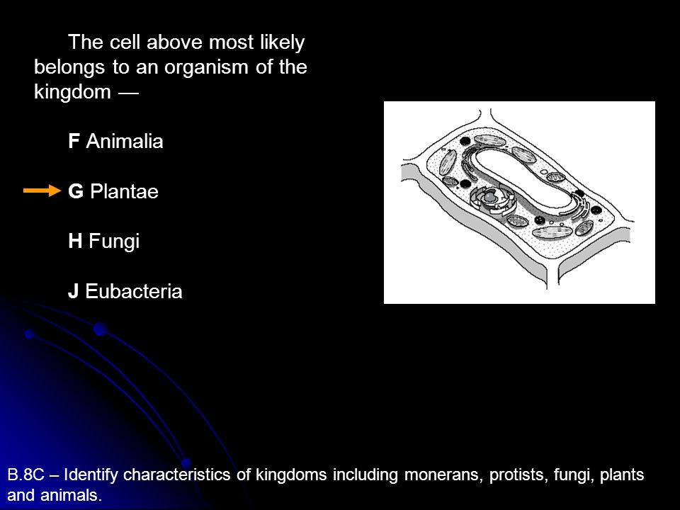 The cell above most likely belongs to an organism of the kingdom F Animalia G Plantae H Fungi J Eubacteria B.8C – Identify characteristics of kingdoms
