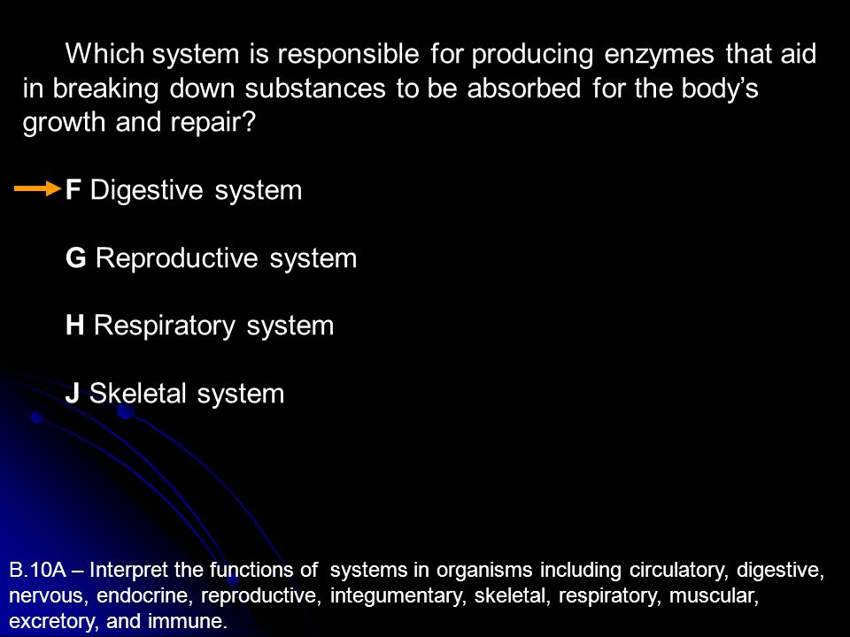 Which system is responsible for producing enzymes that aid in breaking down substances to be absorbed for the bodys growth and repair? F Digestive sys
