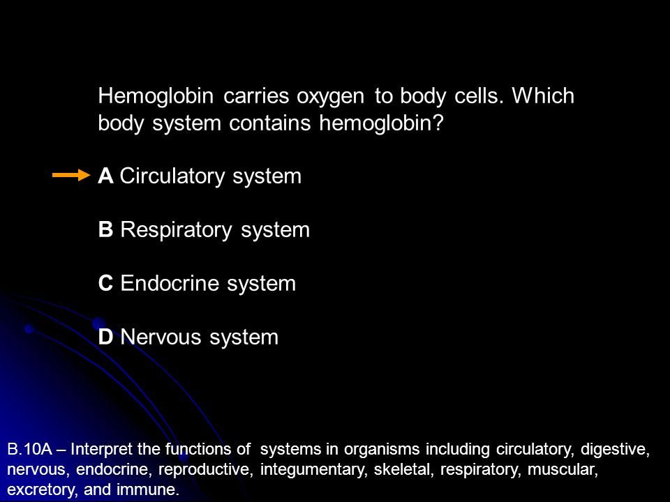 Hemoglobin carries oxygen to body cells. Which body system contains hemoglobin? A Circulatory system B Respiratory system C Endocrine system D Nervous