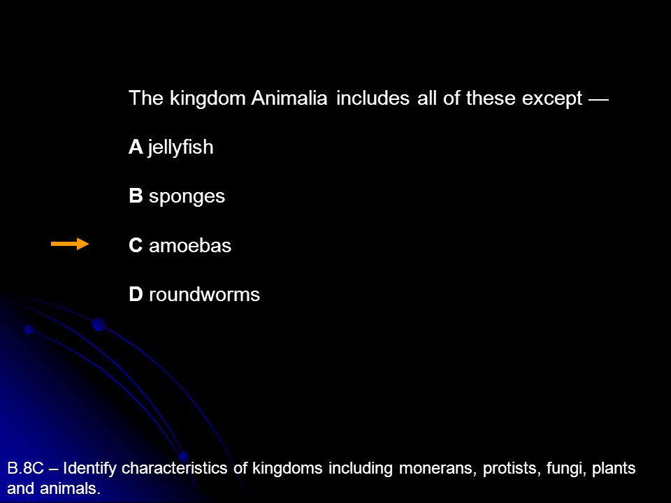 B.8C – Identify characteristics of kingdoms including monerans, protists, fungi, plants and animals. The kingdom Animalia includes all of these except
