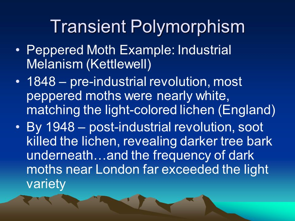 Transient Polymorphism Peppered Moth Example: Industrial Melanism (Kettlewell) 1848 – pre-industrial revolution, most peppered moths were nearly white