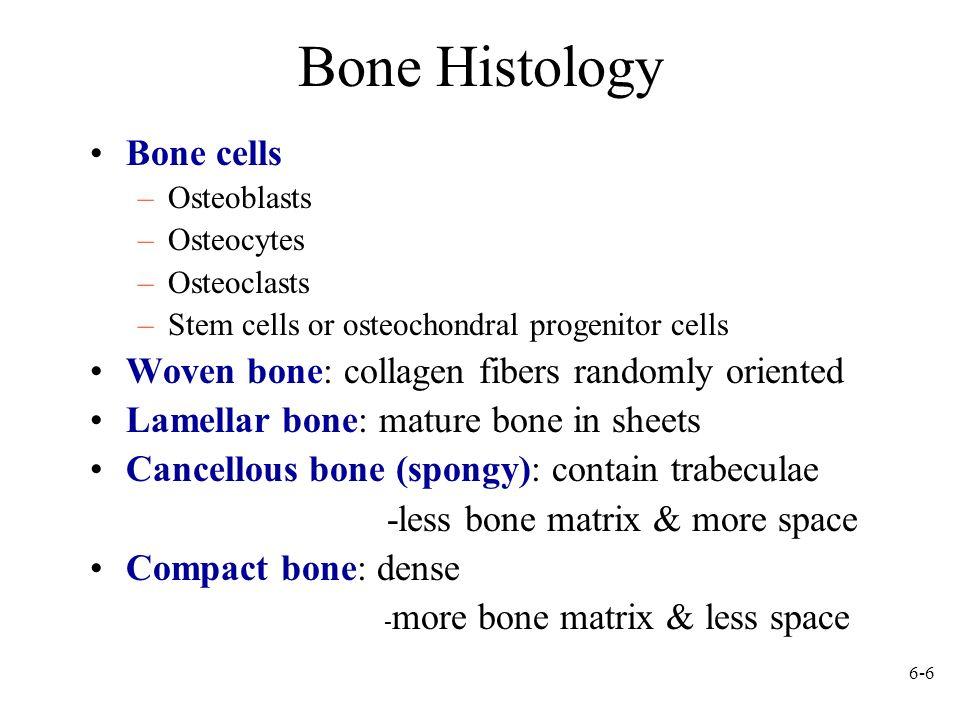 6-6 Bone Histology Bone cells –Osteoblasts –Osteocytes –Osteoclasts –Stem cells or osteochondral progenitor cells Woven bone: collagen fibers randomly
