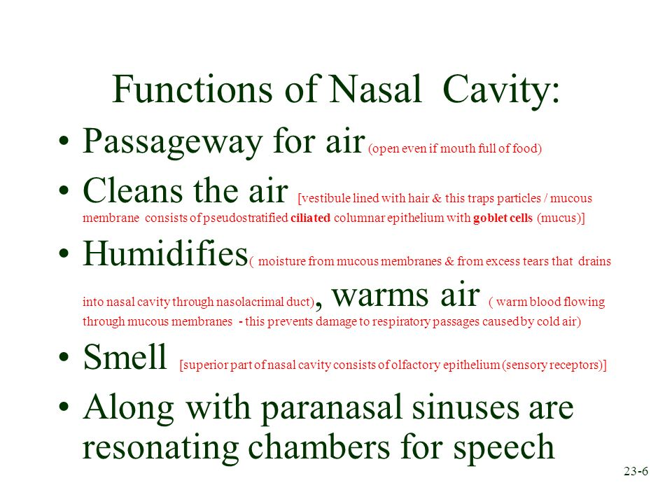 23-6 Functions of Nasal Cavity: Passageway for air (open even if mouth full of food) Cleans the air [vestibule lined with hair & this traps particles
