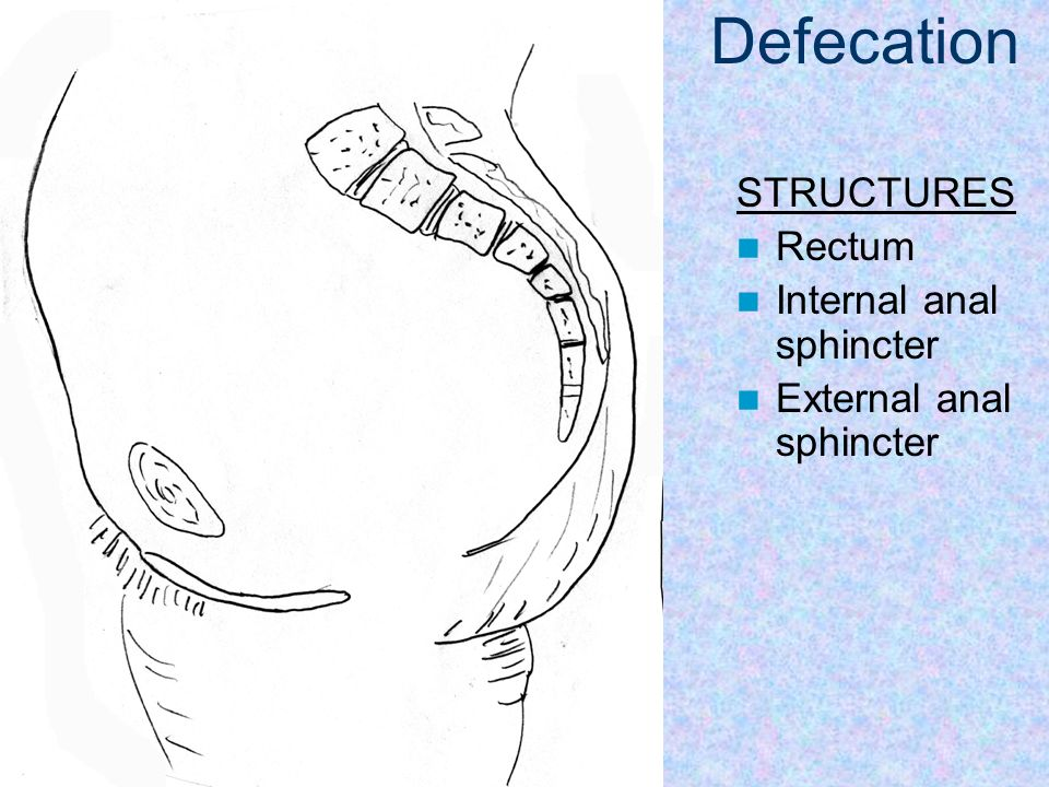 Frolich, Human Anatomy, Pelvis I Defecation STRUCTURES Rectum Internal anal sphincter External anal sphincter