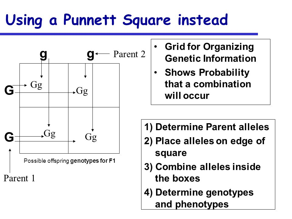 Using a Punnett Square instead Grid for Organizing Genetic Information Shows Probability that a combination will occur 1) Determine Parent alleles 2)