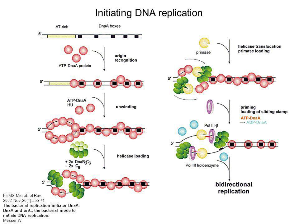 FEMS Microbiol Rev. 2002 Nov;26(4):355-74. The bacterial replication initiator DnaA.