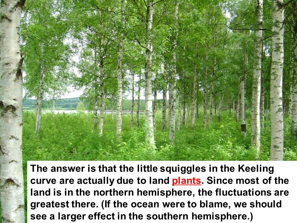 The answer is that the little squiggles in the Keeling curve are actually due to land plants. Since most of the land is in the northern hemisphere, th